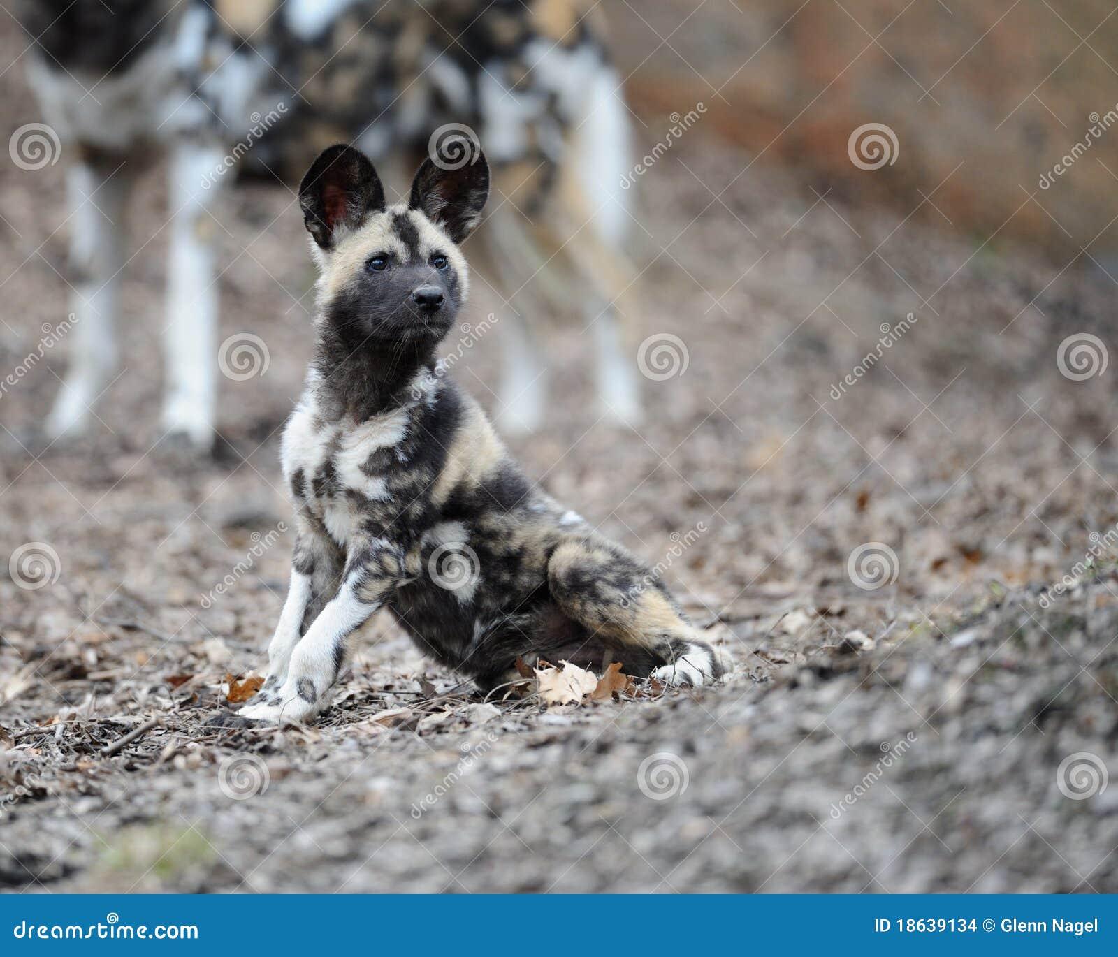 the african wild dog pdf