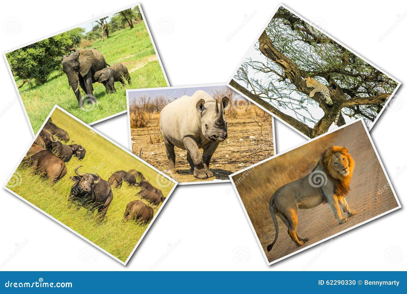 African Big Five Animals Collage Buffalo Elephant Leopard Wildlife