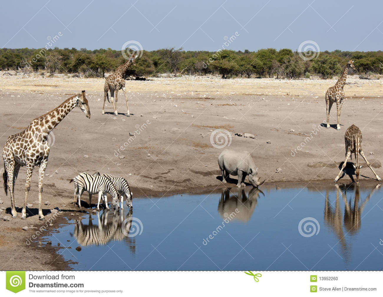 African wildlife at a waterhole in Namibia