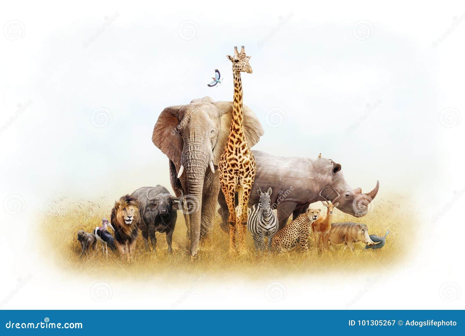 Africano Safari Animal Fantasy Land