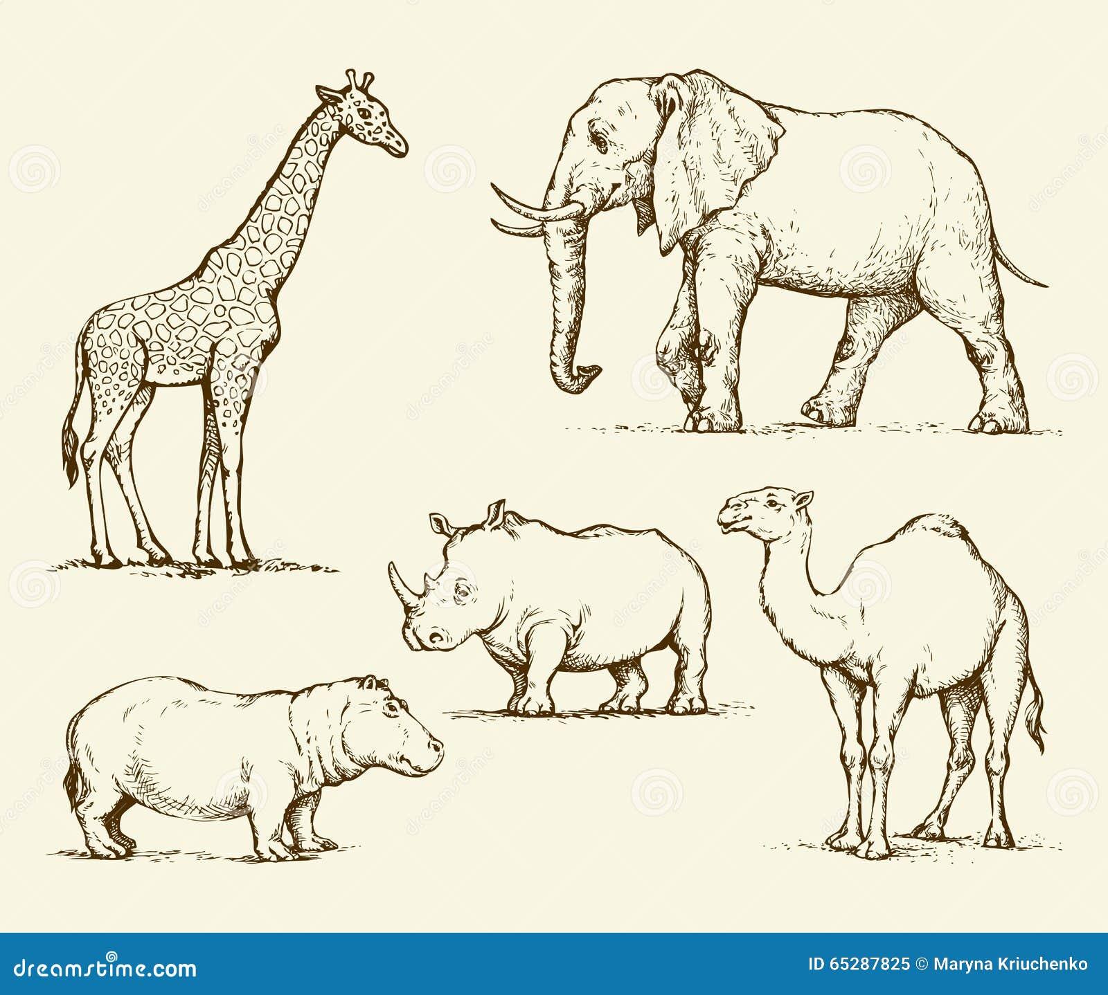 Line Drawings Of African Animals : Afrikaanse dieren vector tekening illustratie