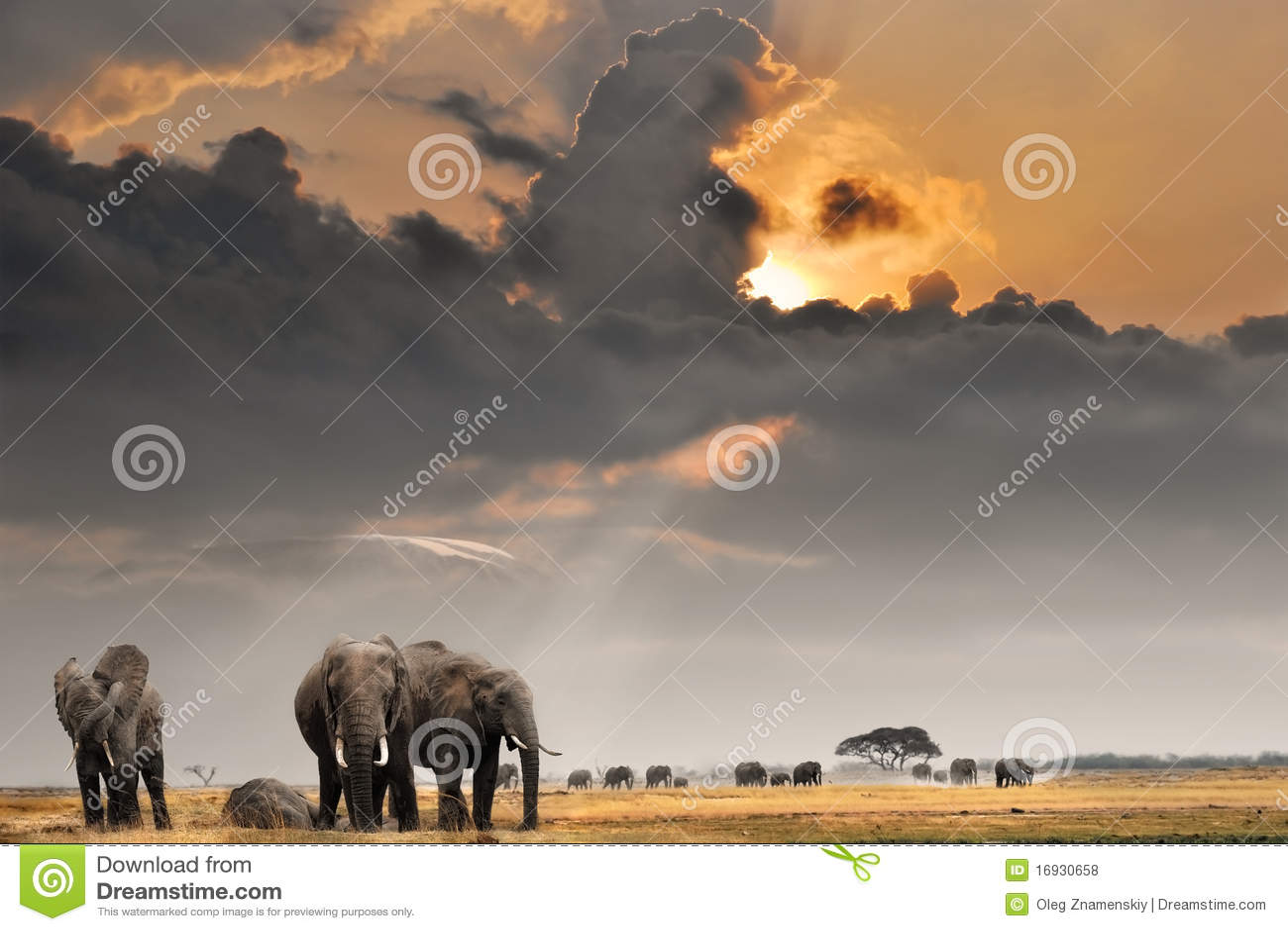 Afrikaanse zonsondergang met olifanten royalty vrije stock foto 39 s afbeelding 16930658 - Oostelijk licht ...