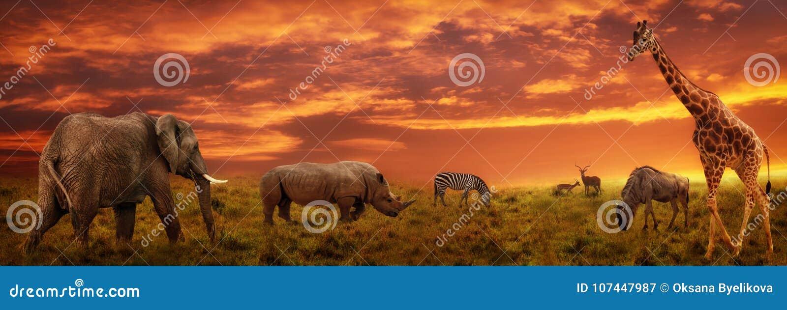 Afrikaanse zonsondergang panoramische achtergrond met silhouet van dieren