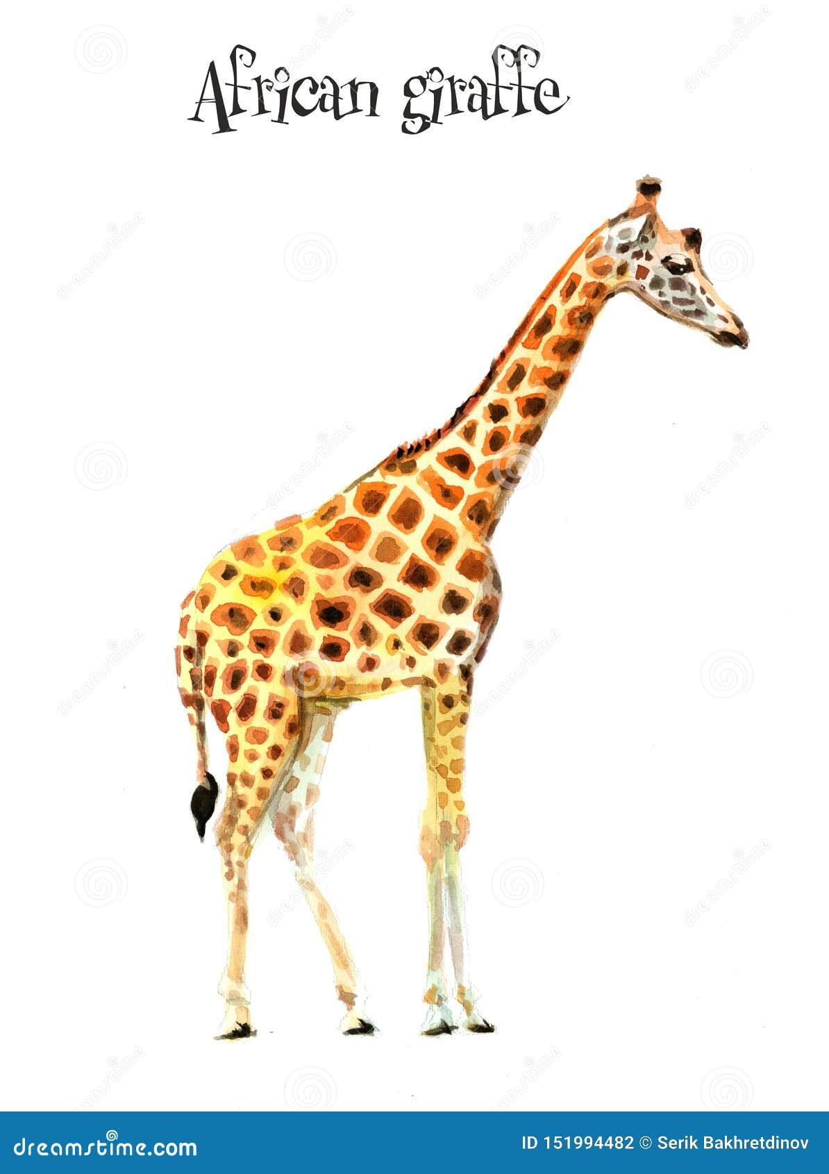 Afrikan giraffe1 illustrat?ren f?r illustrationen f?r handen f?r borstekol g?r teckningen tecknade som look pastell till traditio