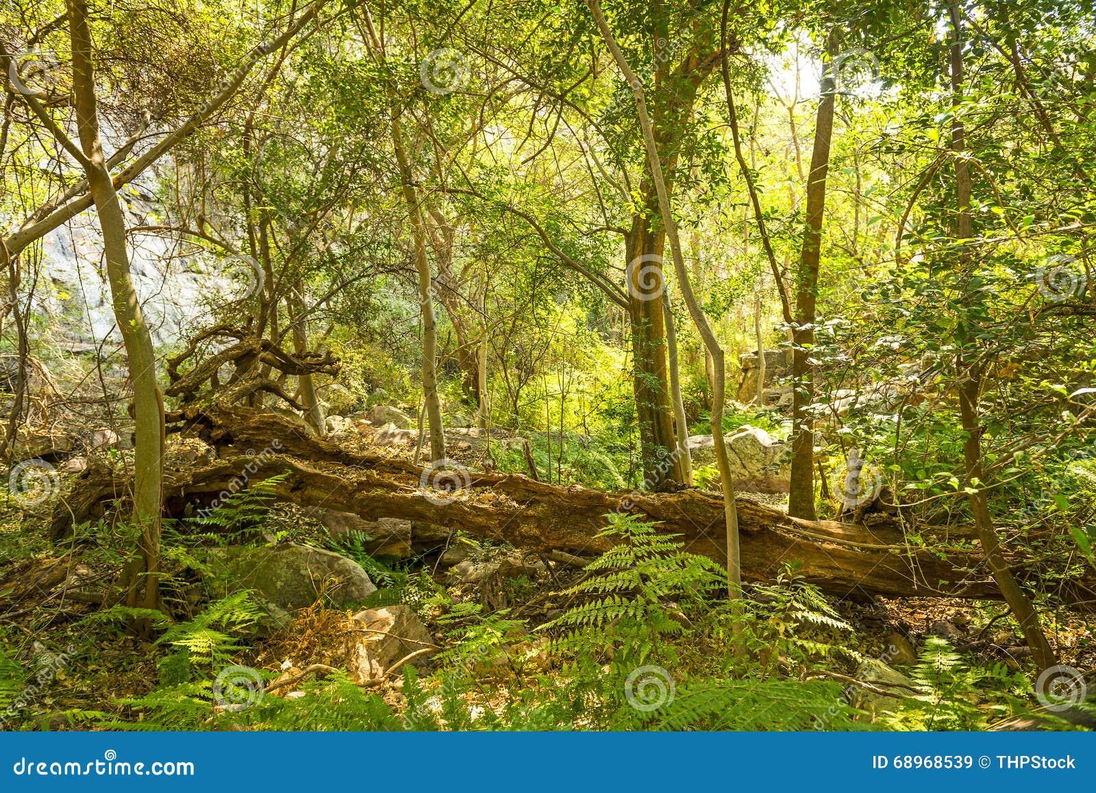 Dschungel Afrika