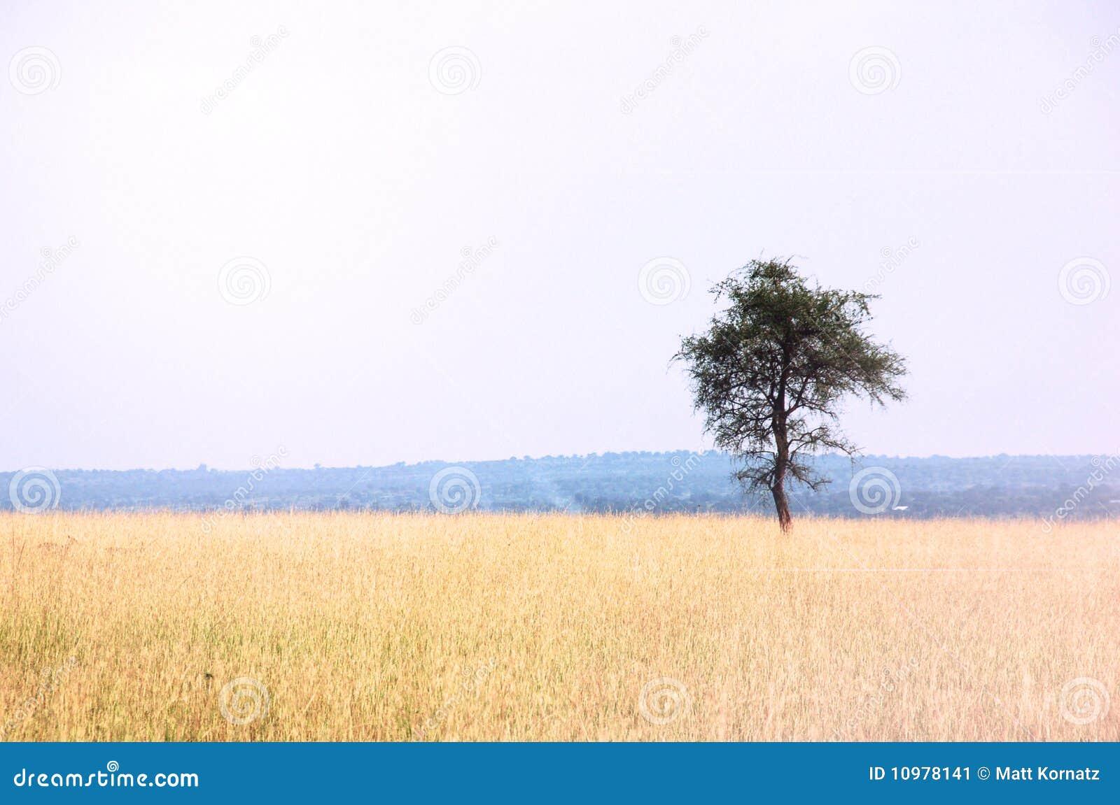 Afrikanische Ebenen-Landschaft