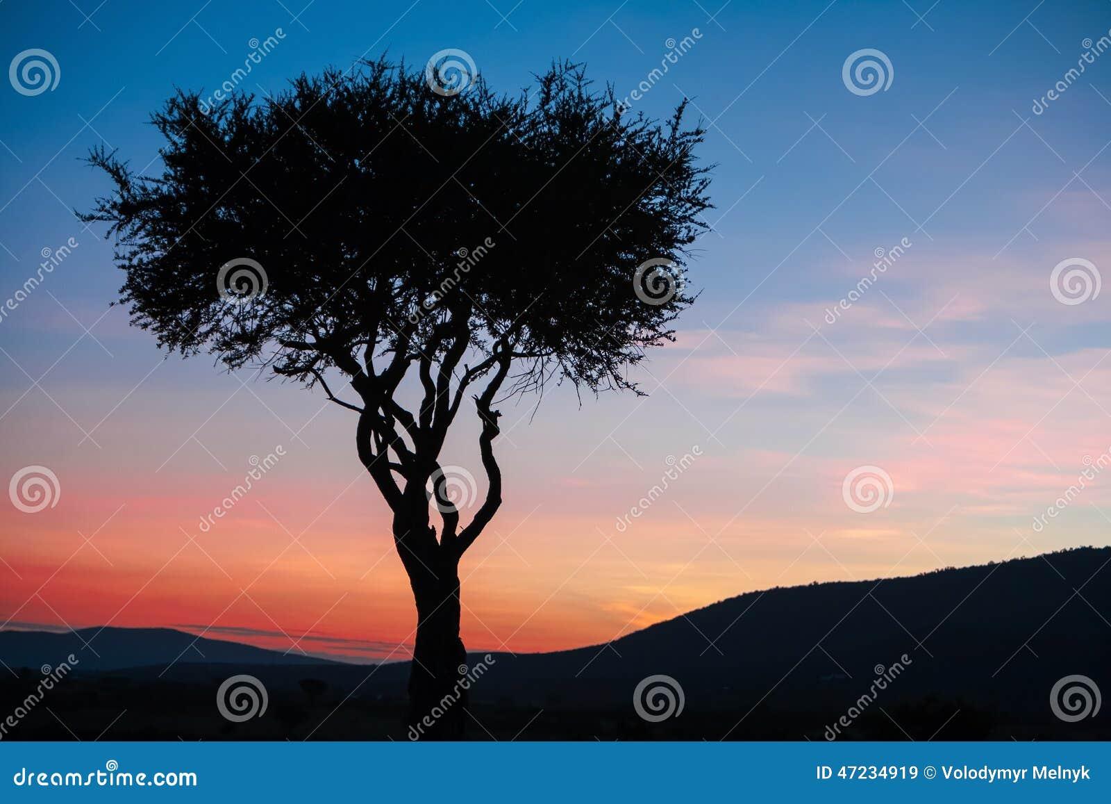 afrikanischer baum im letzten tageslicht sonnenuntergang kenia stockfoto bild 47234919. Black Bedroom Furniture Sets. Home Design Ideas