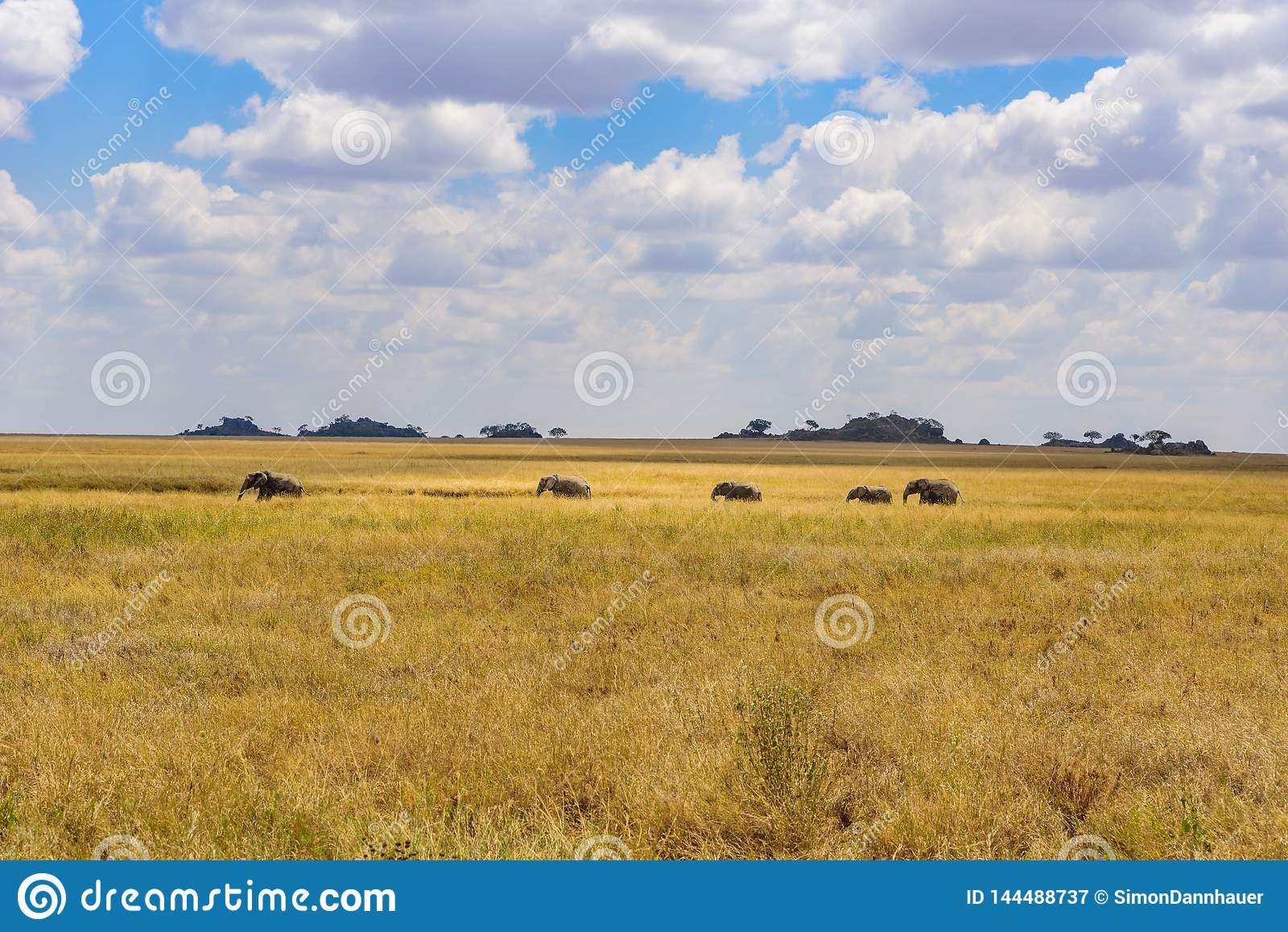 Afrikanischer Elefant-Herde in der Savanne von Serengeti bei Sonnenuntergang Akazienb?ume auf den Ebenen in Nationalpark Serenget