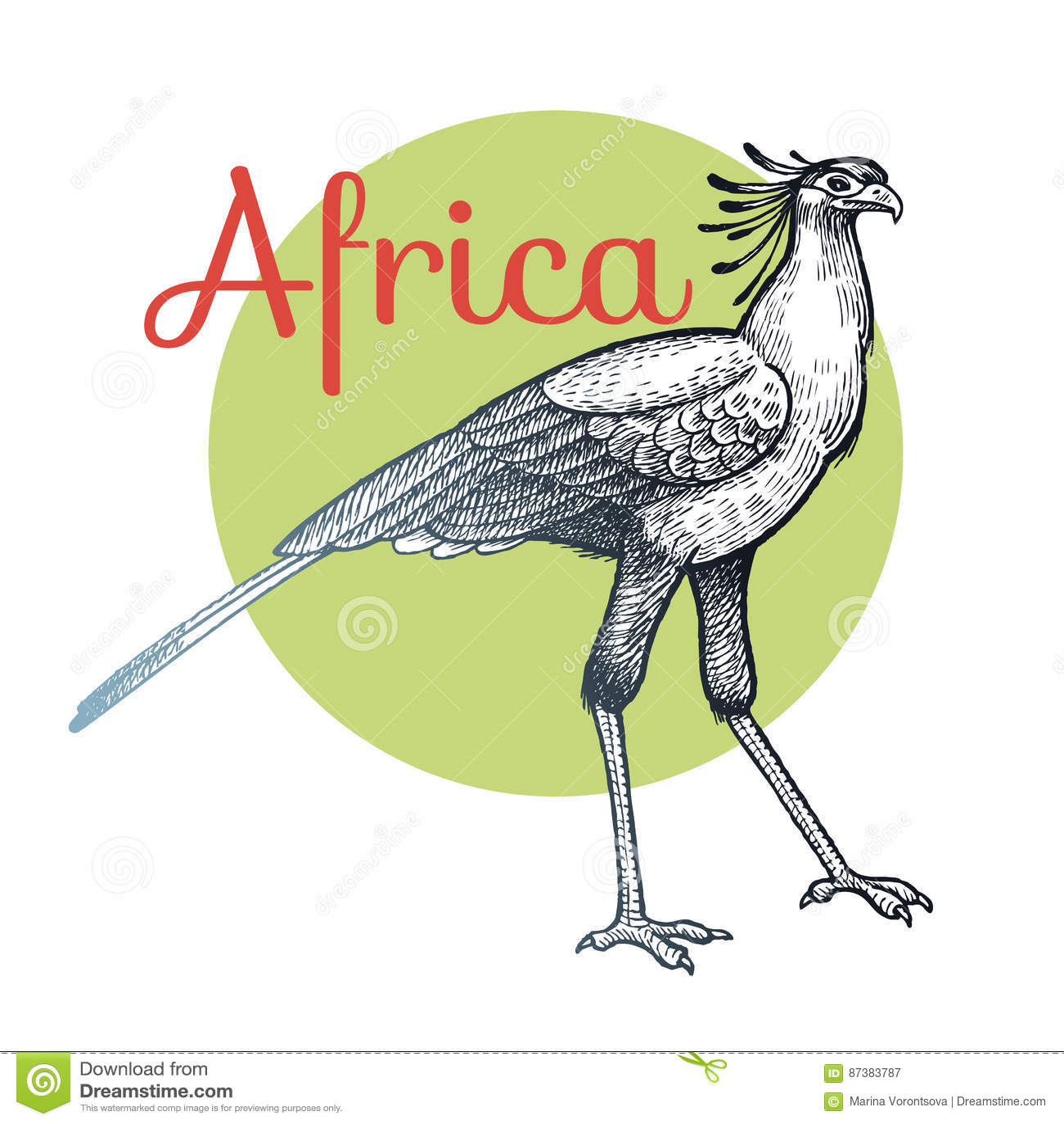 Afrikanischer Sekretär Vogel