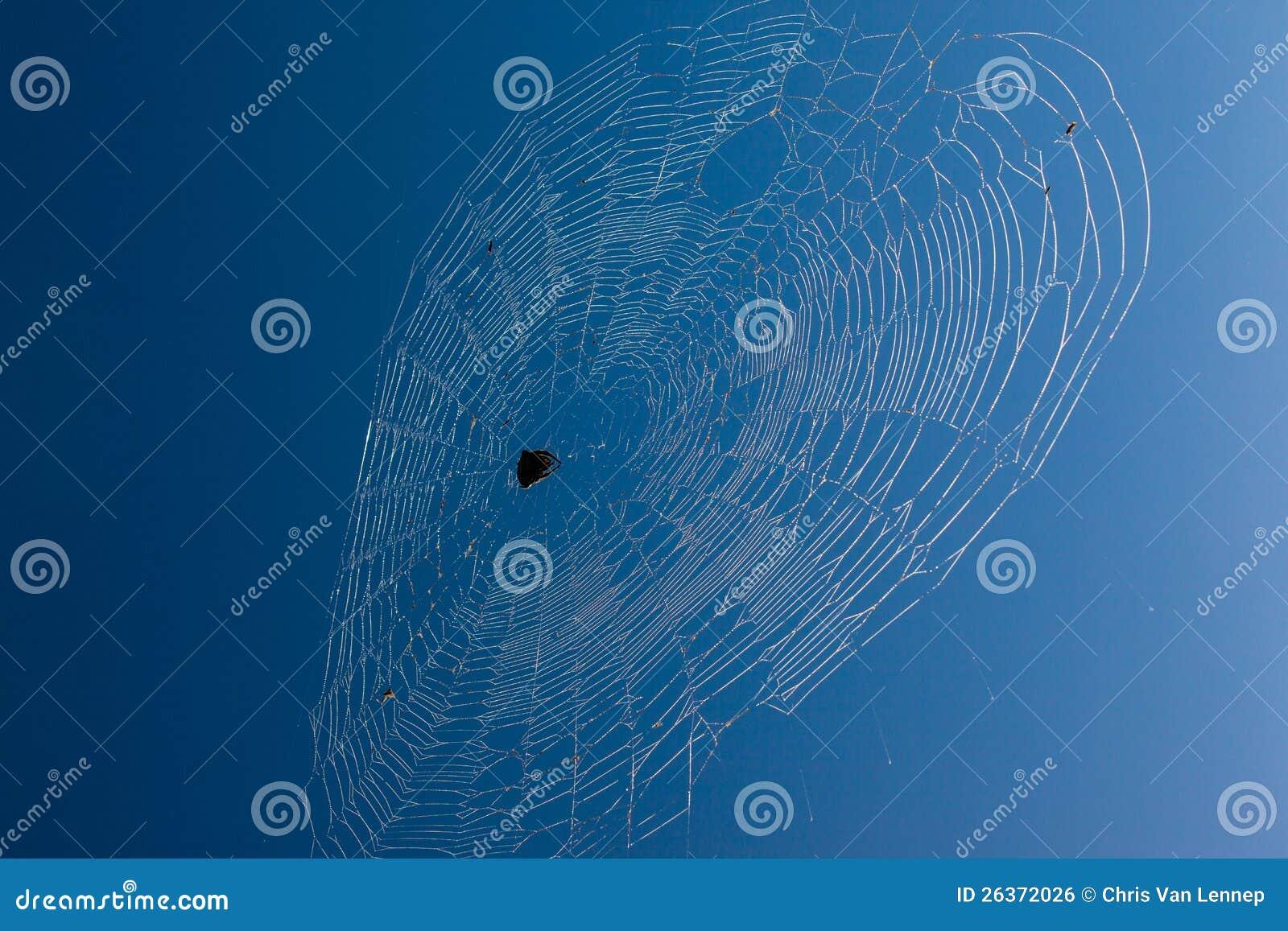 Afrikanischer Spinnen-Web-blauer Himmel