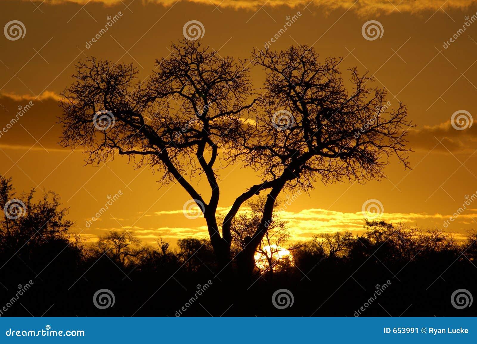Afrikansk solnedgång