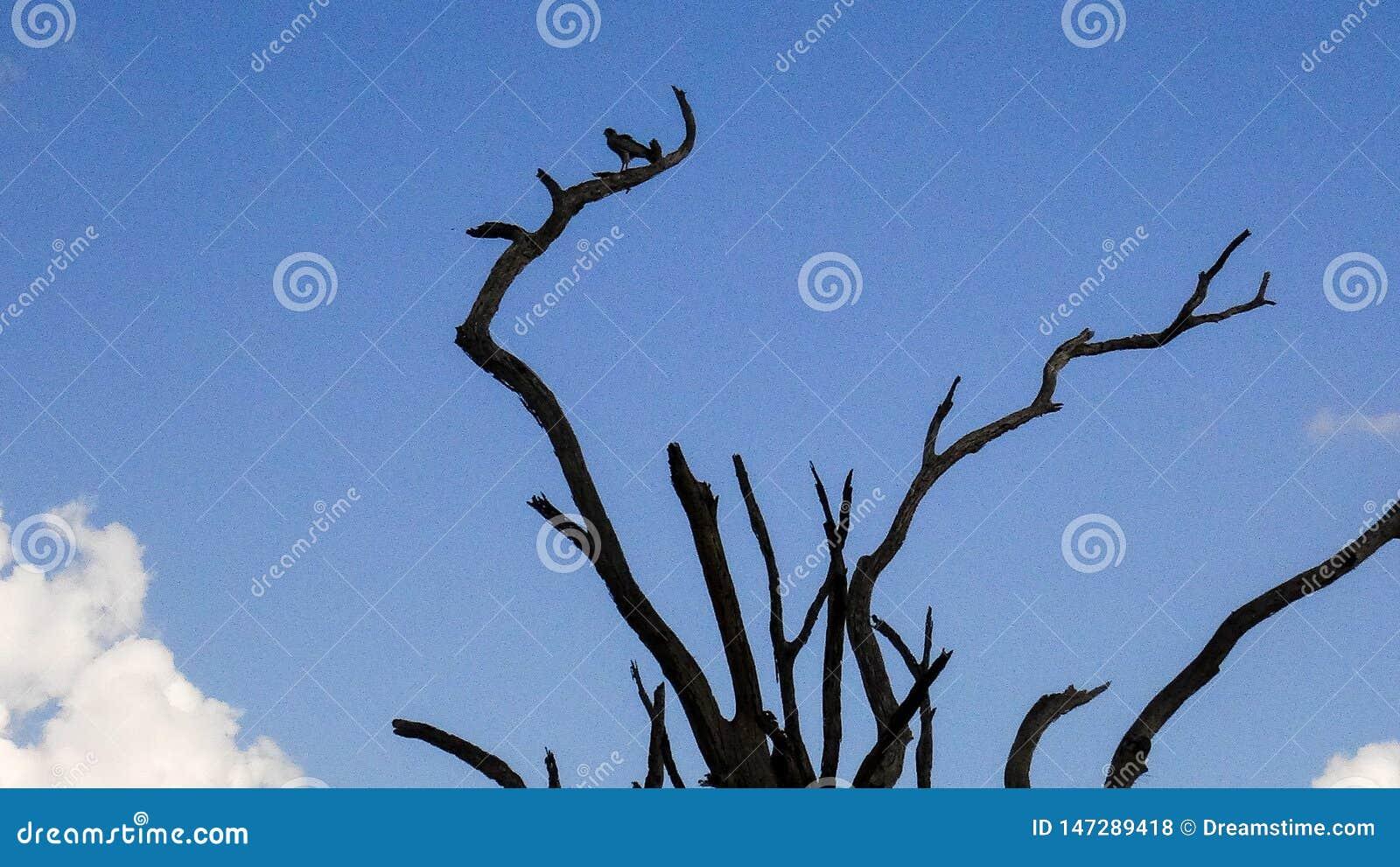 Afrikanskt träd i sommar med fågeln