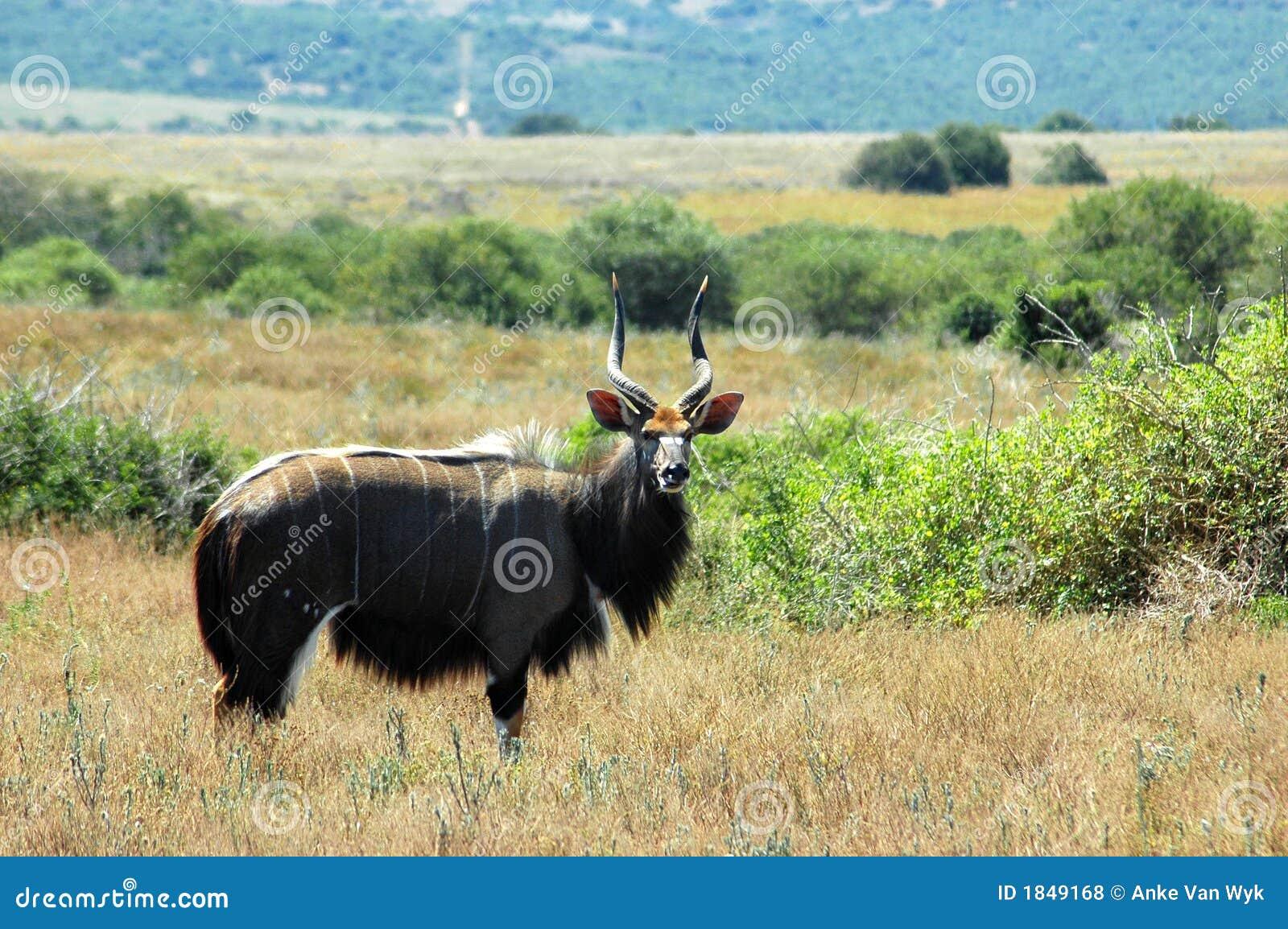 Afrikas wild lebende Tiere
