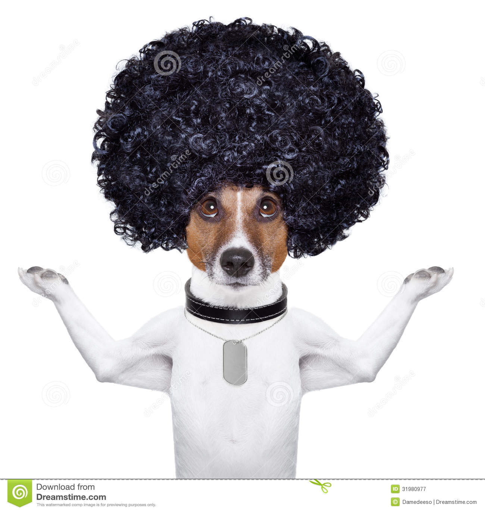Big Black Dog Curly Hair