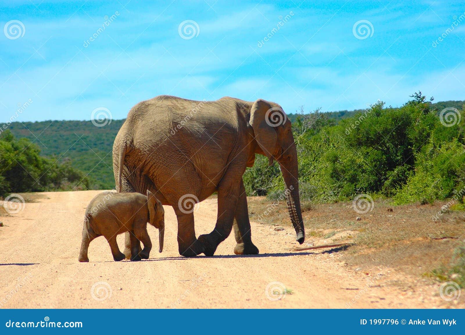 Afryce s przyrody