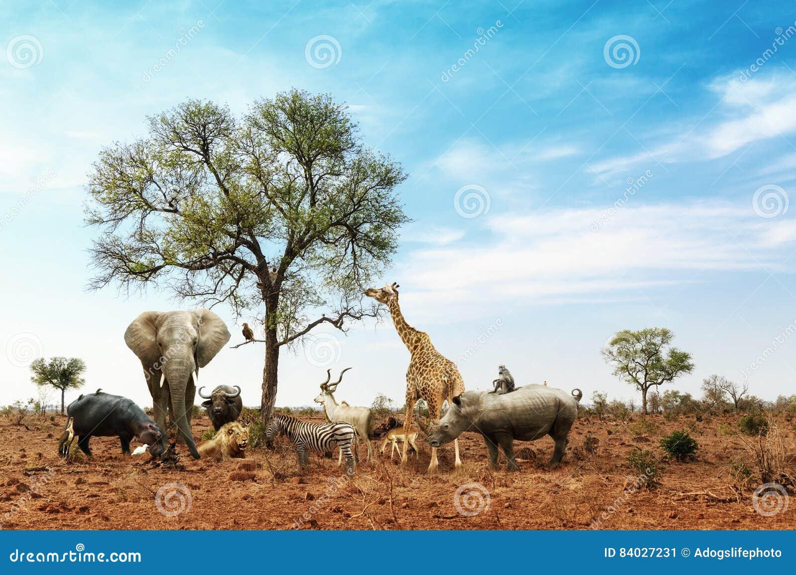 Afrykańscy safari zwierzęta Spotyka Wpólnie Wokoło drzewa