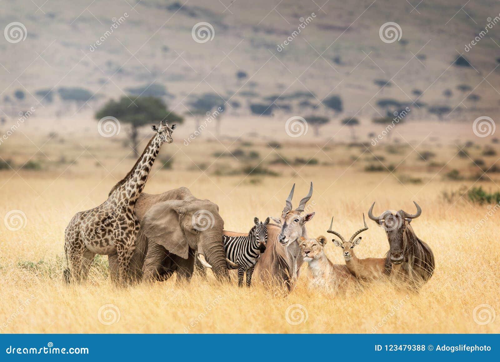 Czy Kenia naprawdę spotyka się z Afrykaninem