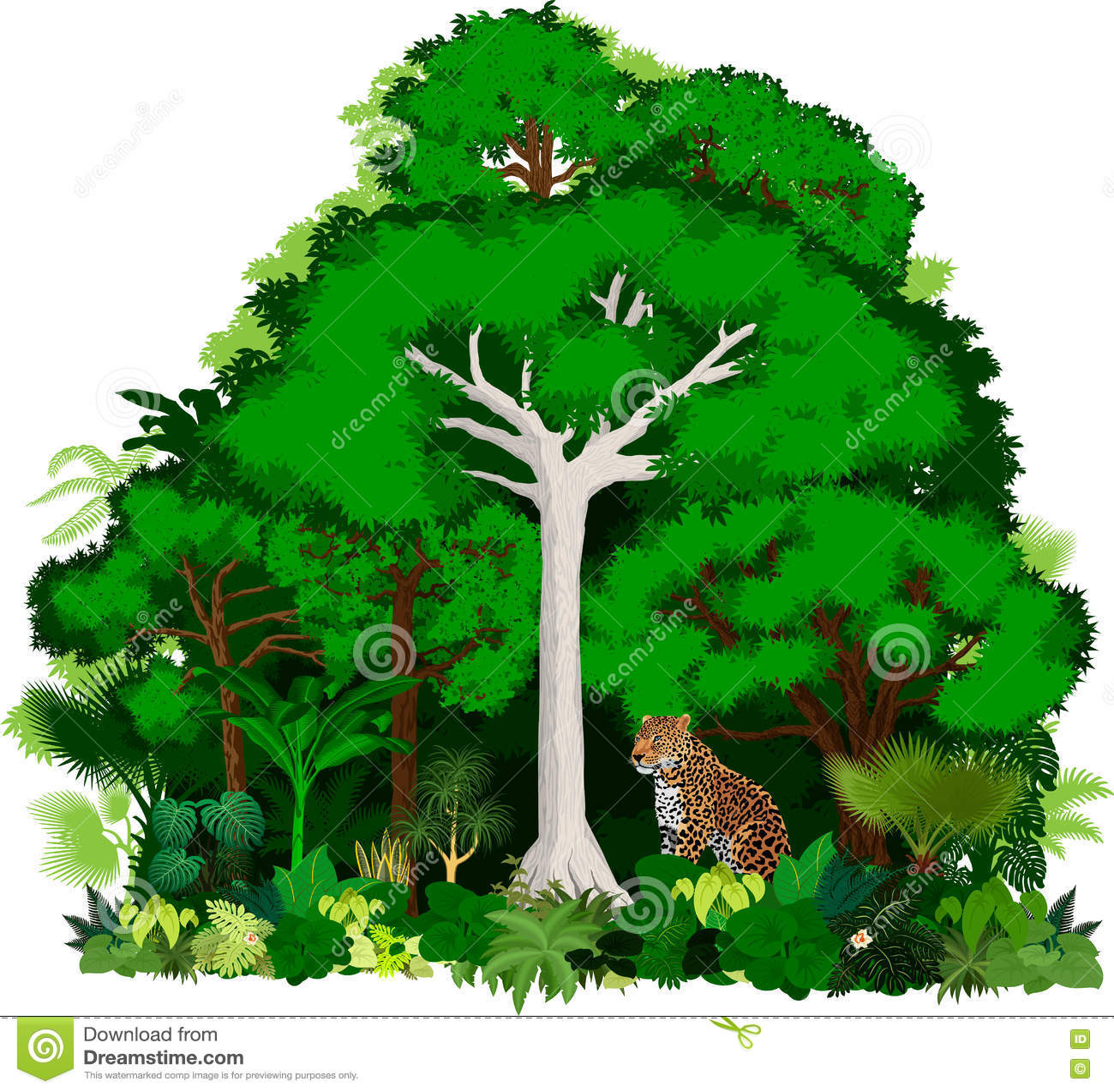 Afrykańska wektorowa dżungli ilustracja Wektorowa Tropikalna Lasowa dżungla z lampartem