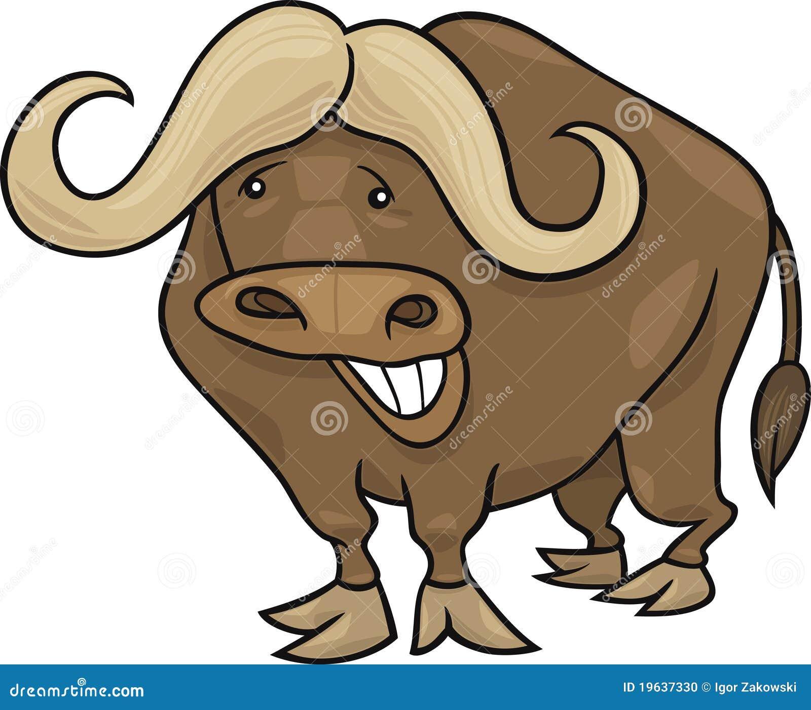 Afrykański bizon