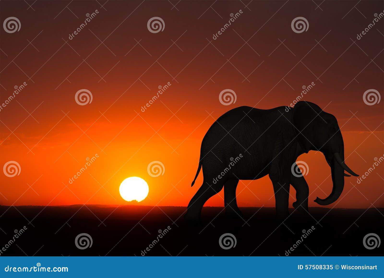 Afryka Słonia Wschodu Słońca Zmierzchu Przyroda Ilustracji