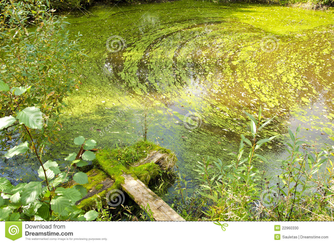 Agal bloom pond forest green water broken bridge stock for Green water in pond