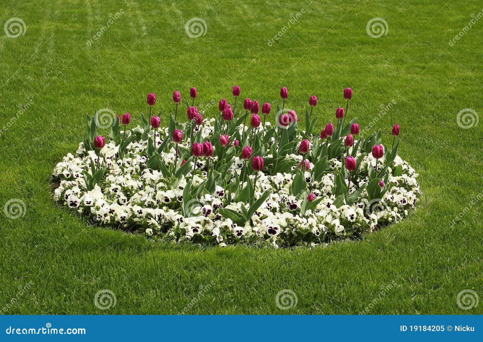 Agencement de fleurs de tulipe et de pens es photo libre for Agencement jardin 3d