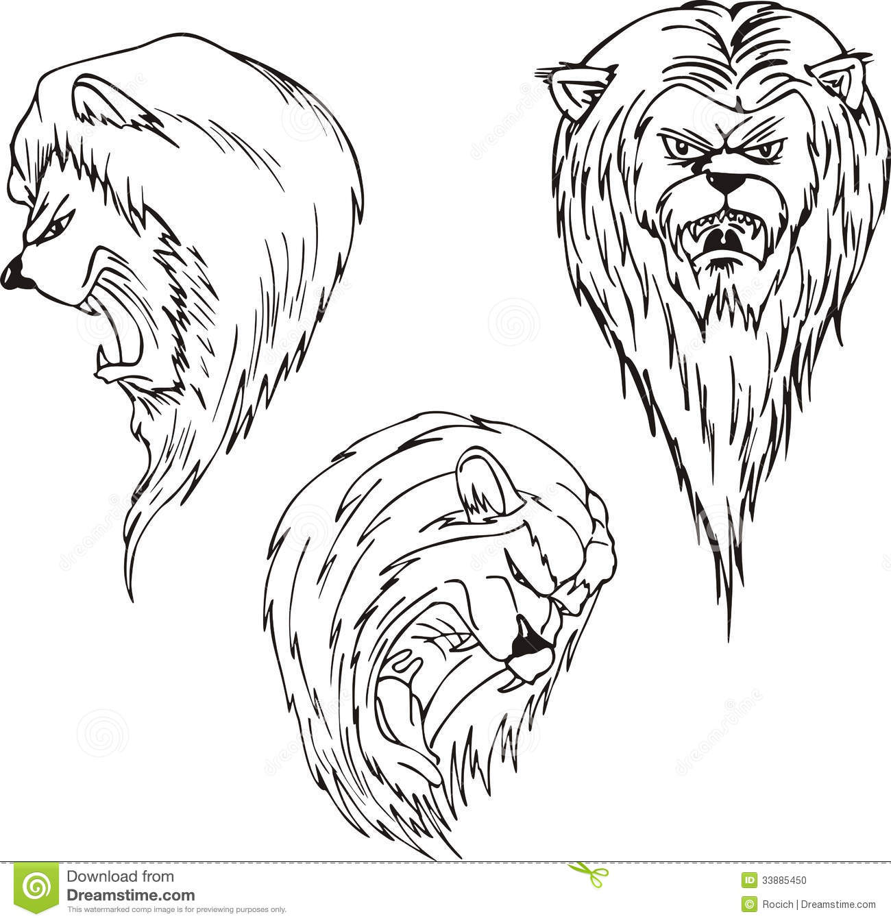 aggressive lion heads stock photo image 33885450. Black Bedroom Furniture Sets. Home Design Ideas