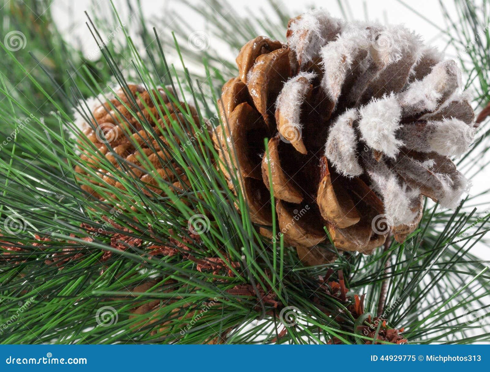 Aghi del pino e della pigna fotografia stock immagine for I semi della pigna