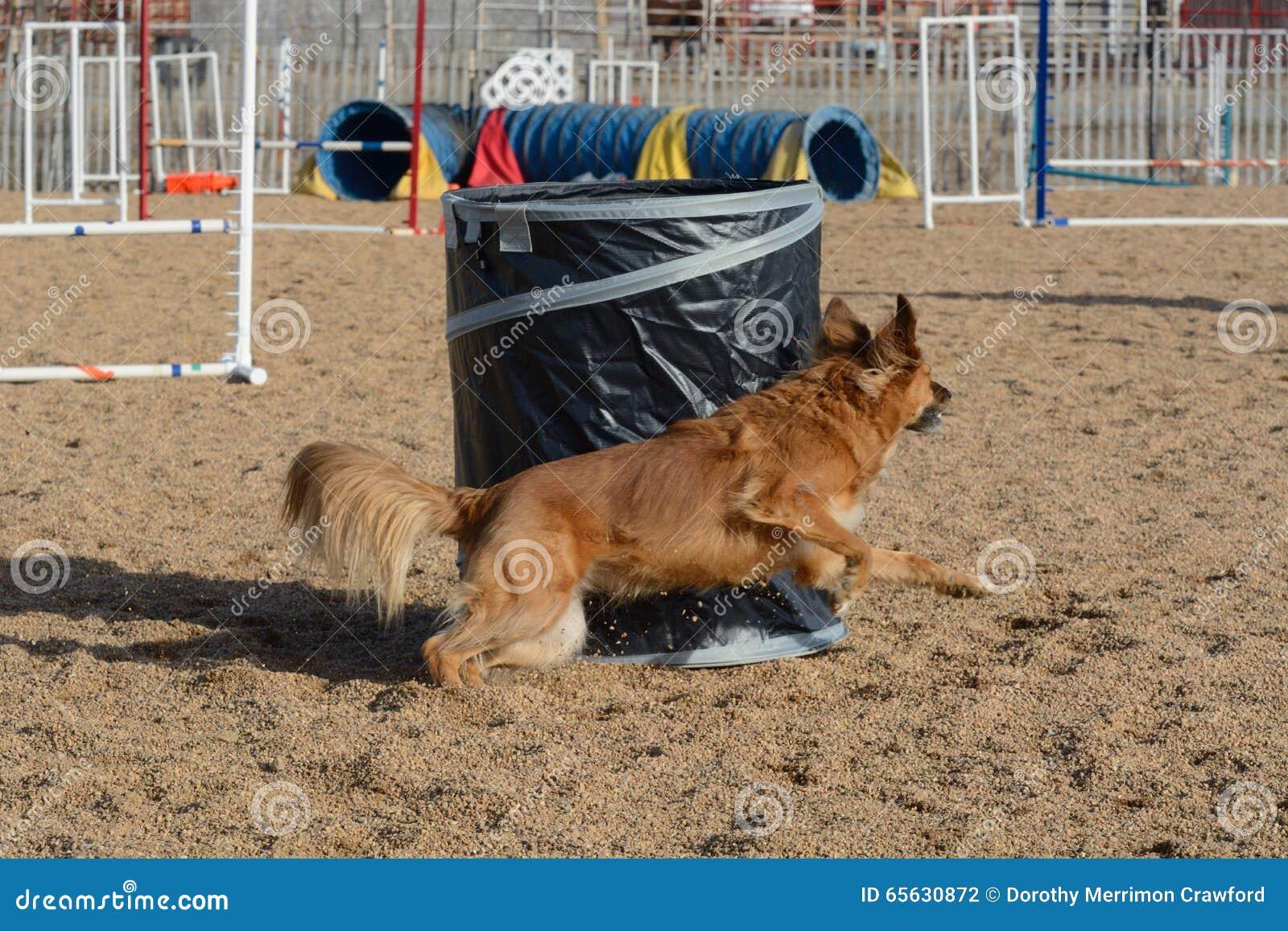 Agilité de chien : le baril