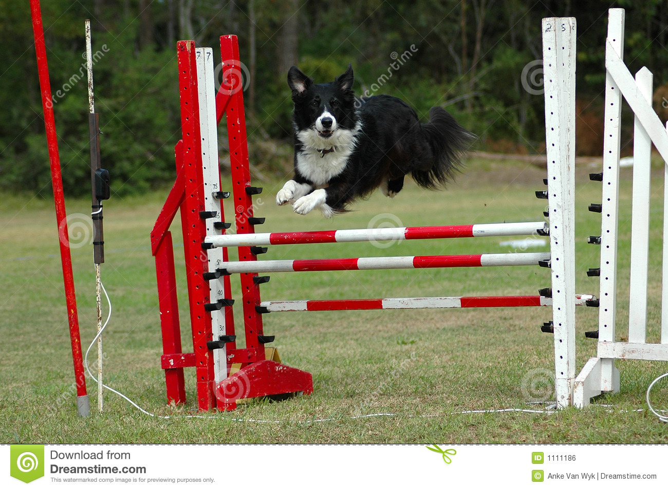 Life with border collie collapse syndrome