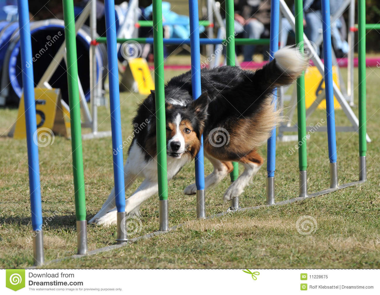 Where To Find The Best Trial Collie Dog To Buy