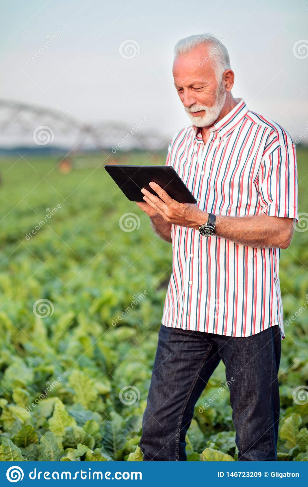 Agrónomo o granjero mayor feliz y satisfecho que usa una tableta en campo de la soja