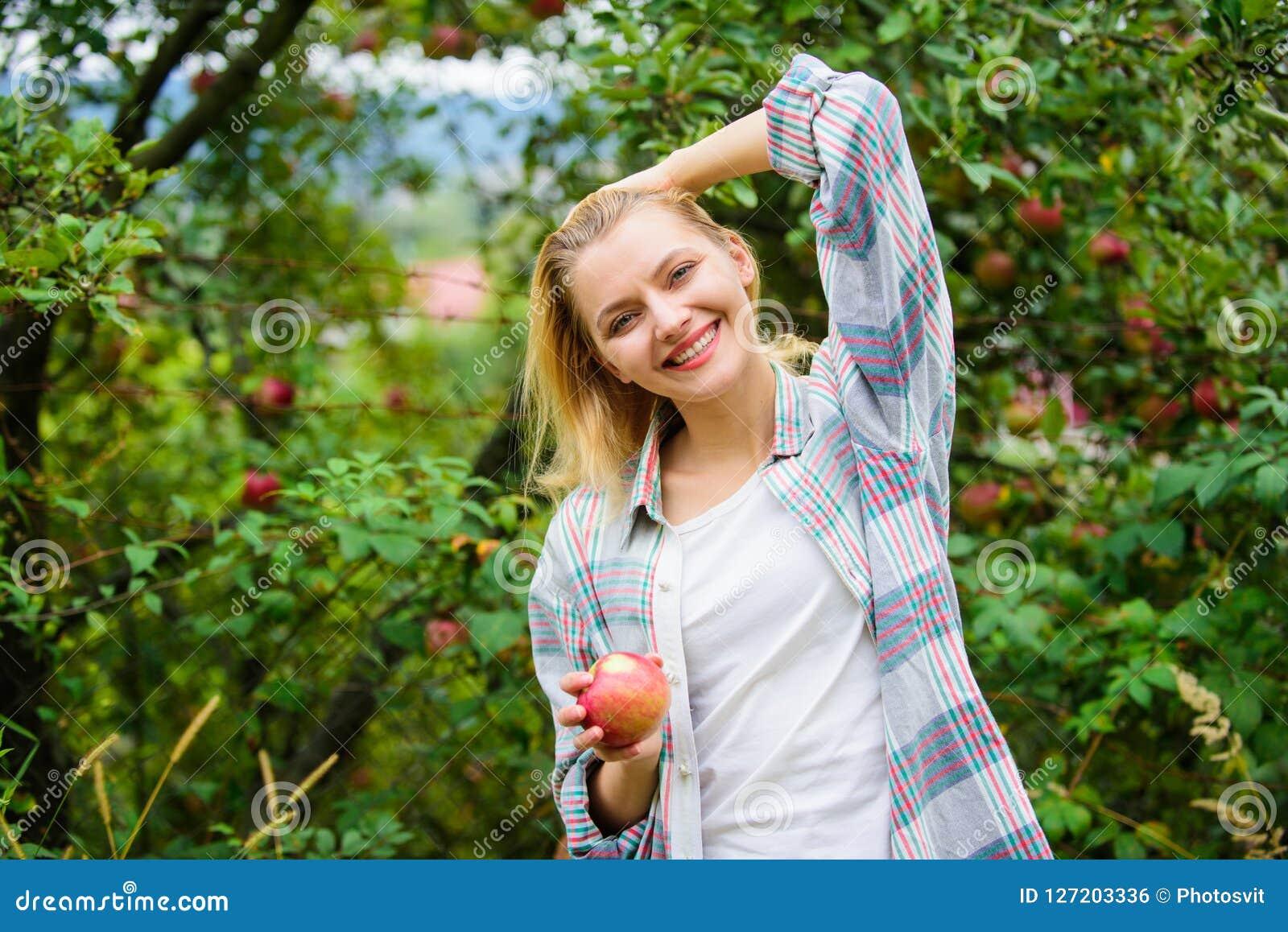 Agricoltore che seleziona frutta matura dall albero Raccolta del concetto di stagione Fondo del giardino della mela della tenuta