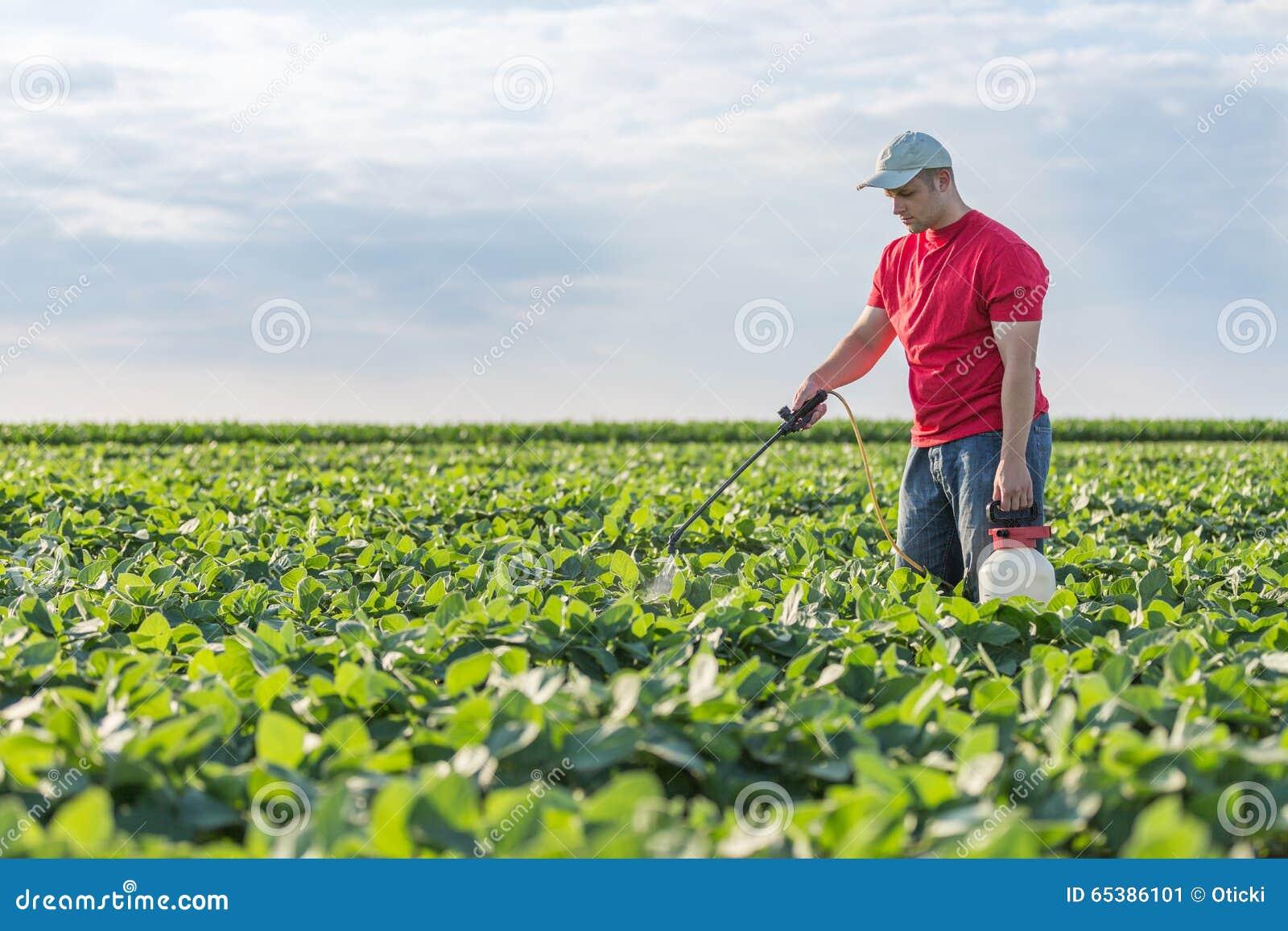 Agricoltore che spruzza le piante di soia verde fotografia for Piante di lamponi acquisto