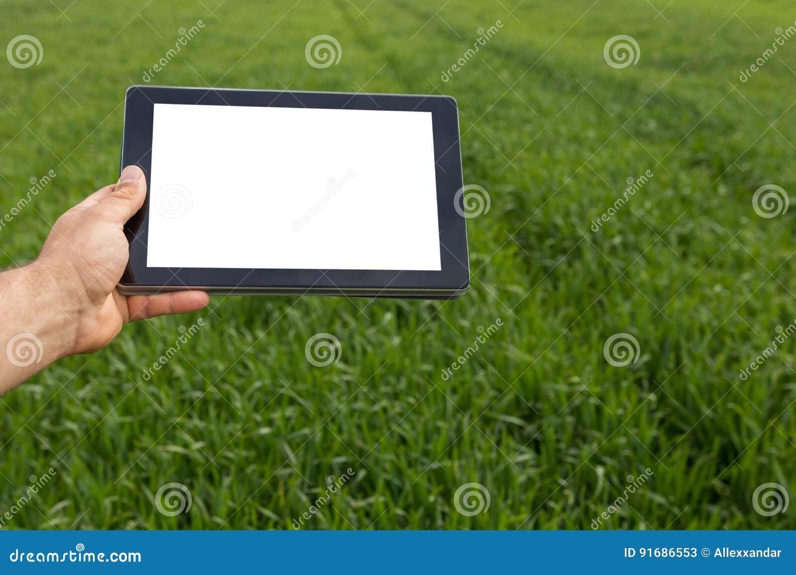 Agricoltore che utilizza il computer della compressa nel giacimento di grano verde Schermo bianco
