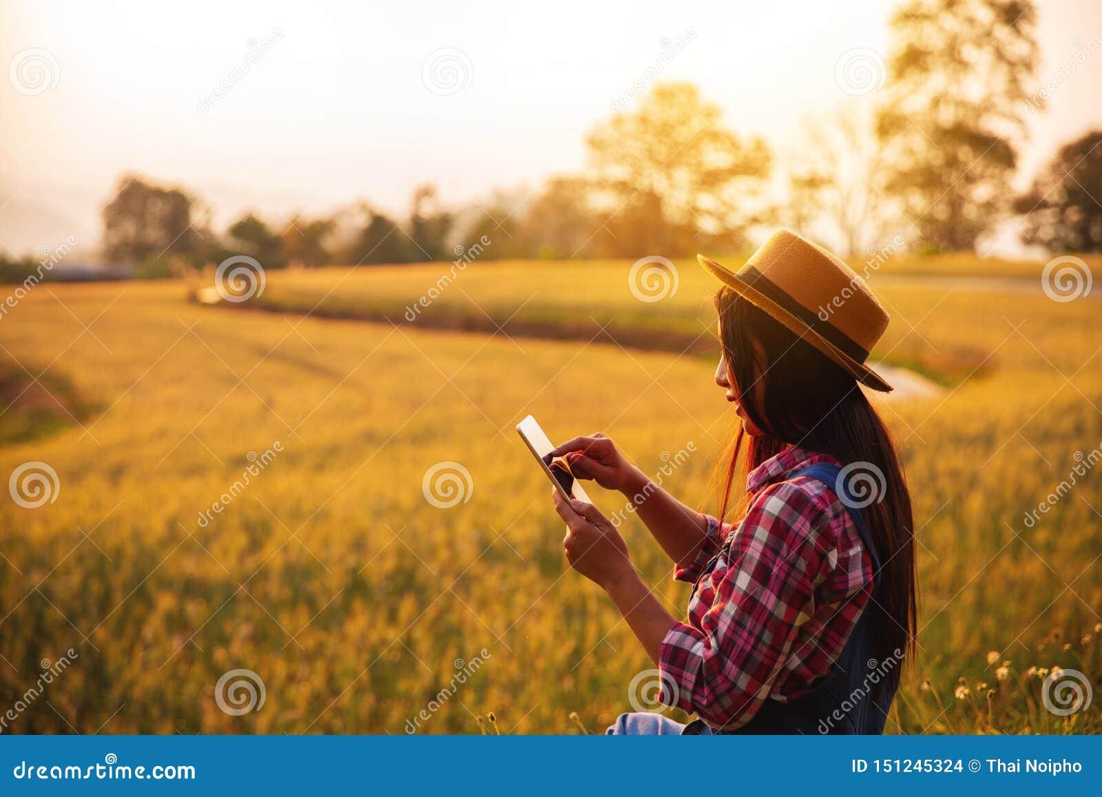 Agricoltore femminile che utilizza il computer della compressa nel campo del raccolto del grano dell oro