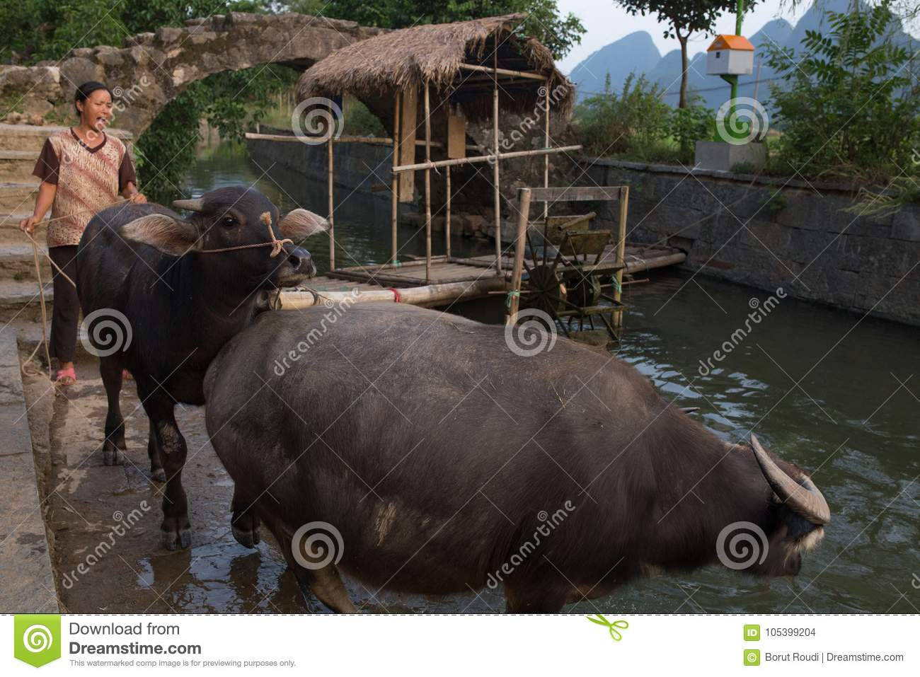 Agricoltore Pulling Buffalo a Guilin
