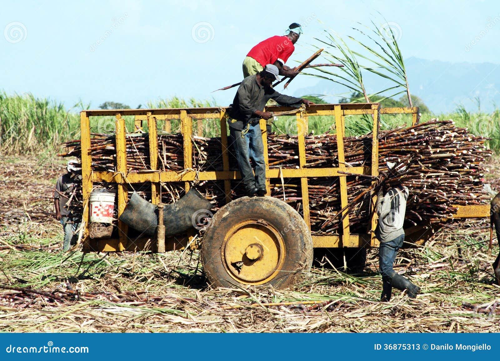 Download Agricoltori dei dominicani fotografia stock editoriale. Immagine di turismo - 36875313