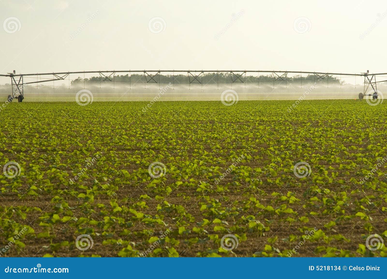 I raccolti d 39 irrigazione nel campo fotografia stock for Spruzzi irrigazione