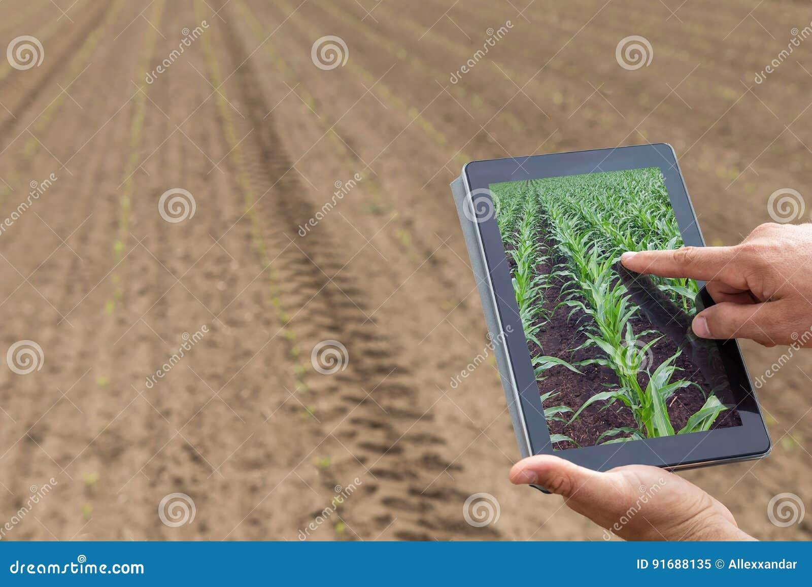 Agricoltura astuta Agricoltore che usando piantatura del cereale della compressa Agr moderno