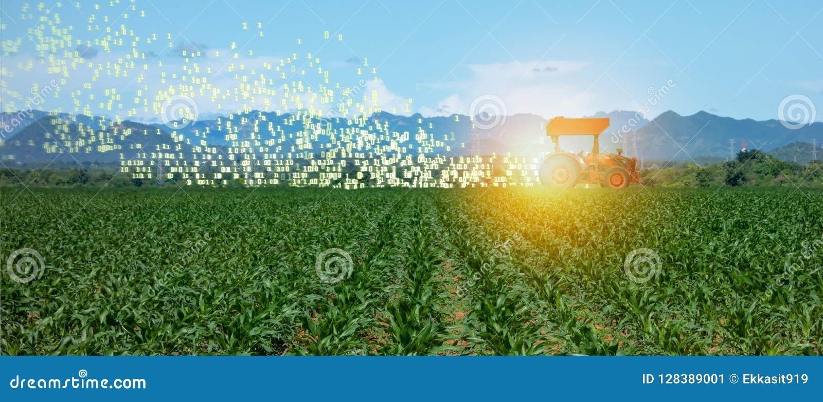 Agricoltura astuta di Iot, agricoltura nell industria 4 0 tecnologie con il concetto di apprendimento automatico e di intelligenz