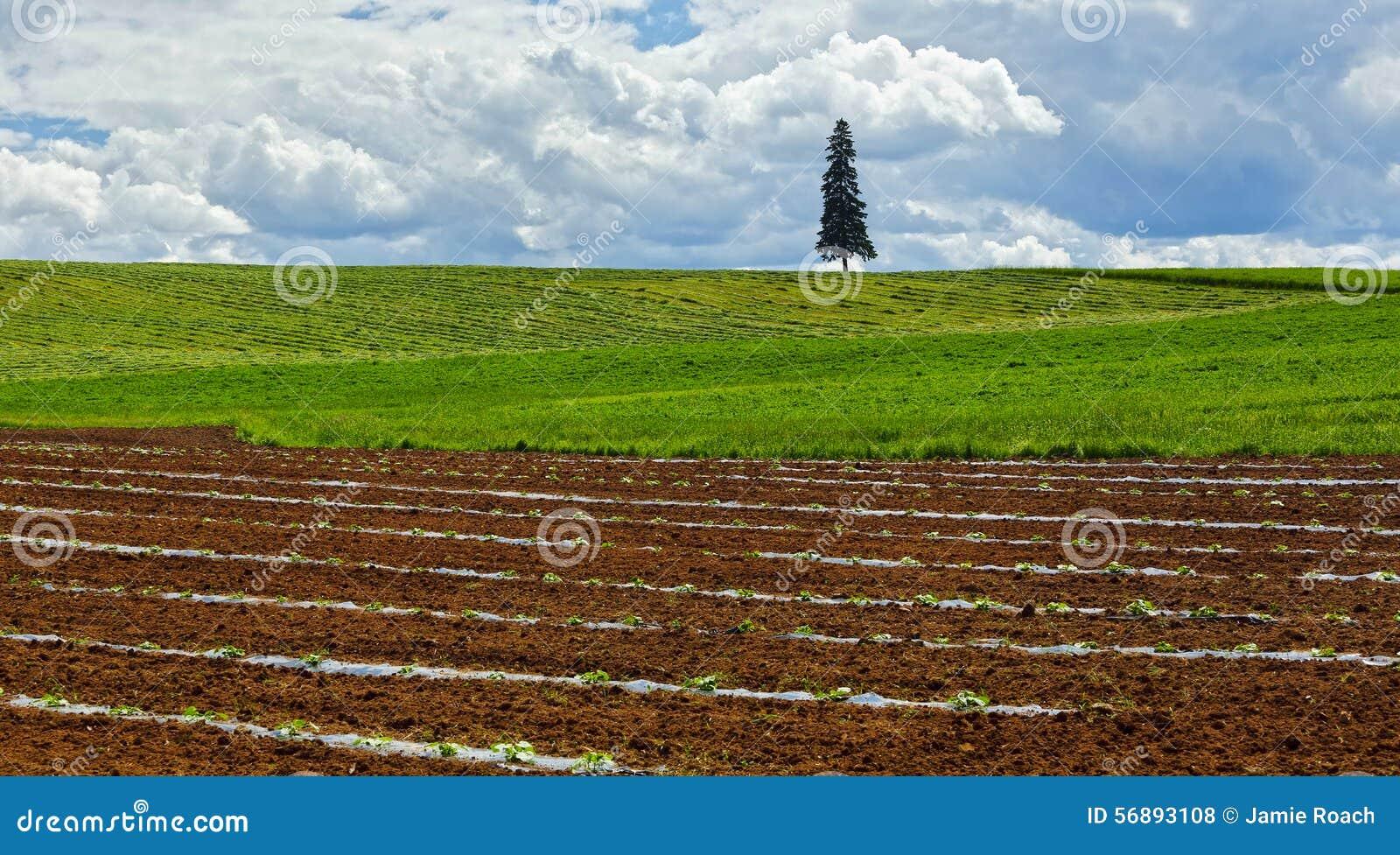 Agricoltura fresca dei raccolti di piantatura del terreno coltivabile