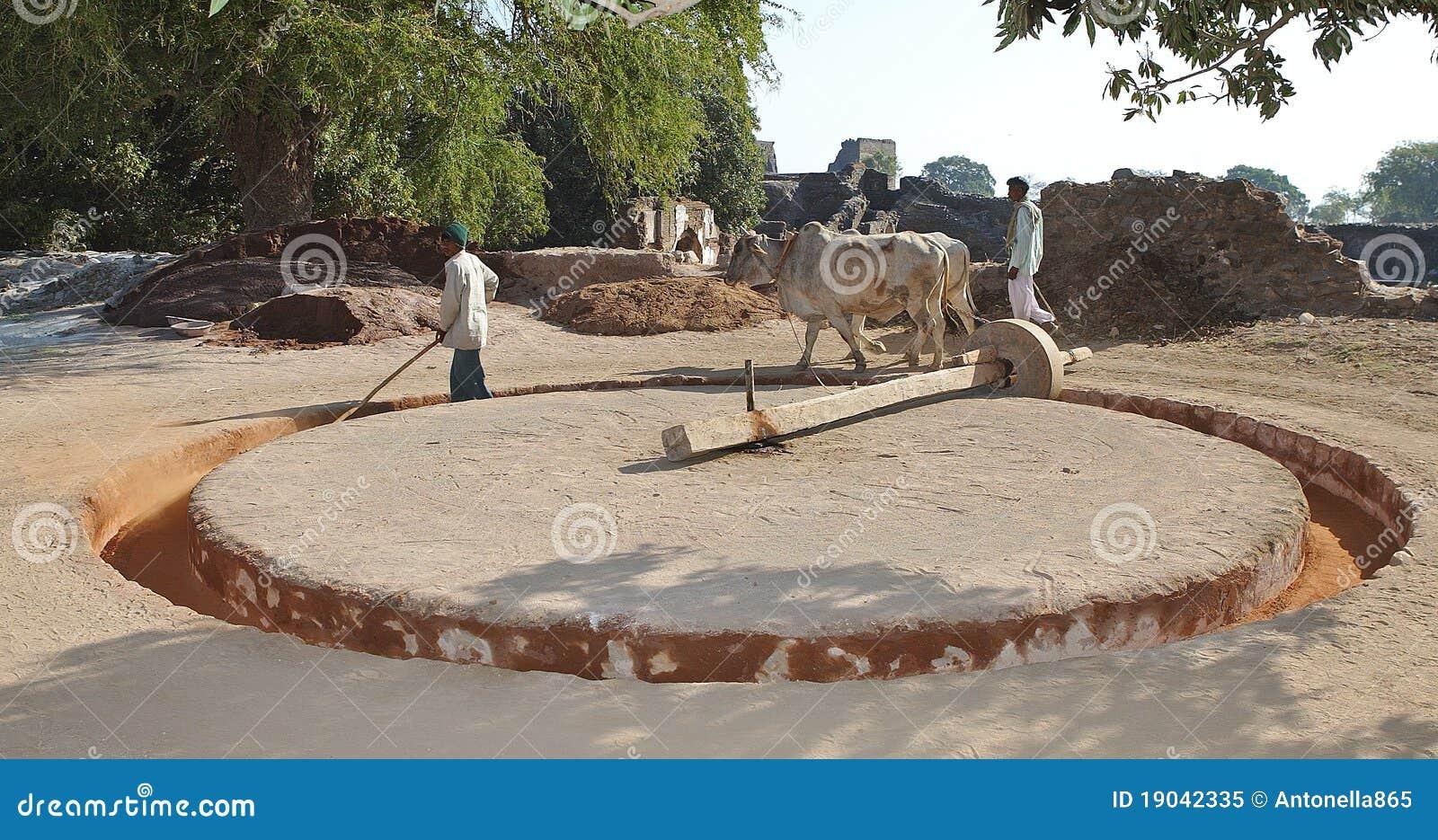 Agricoltura in India