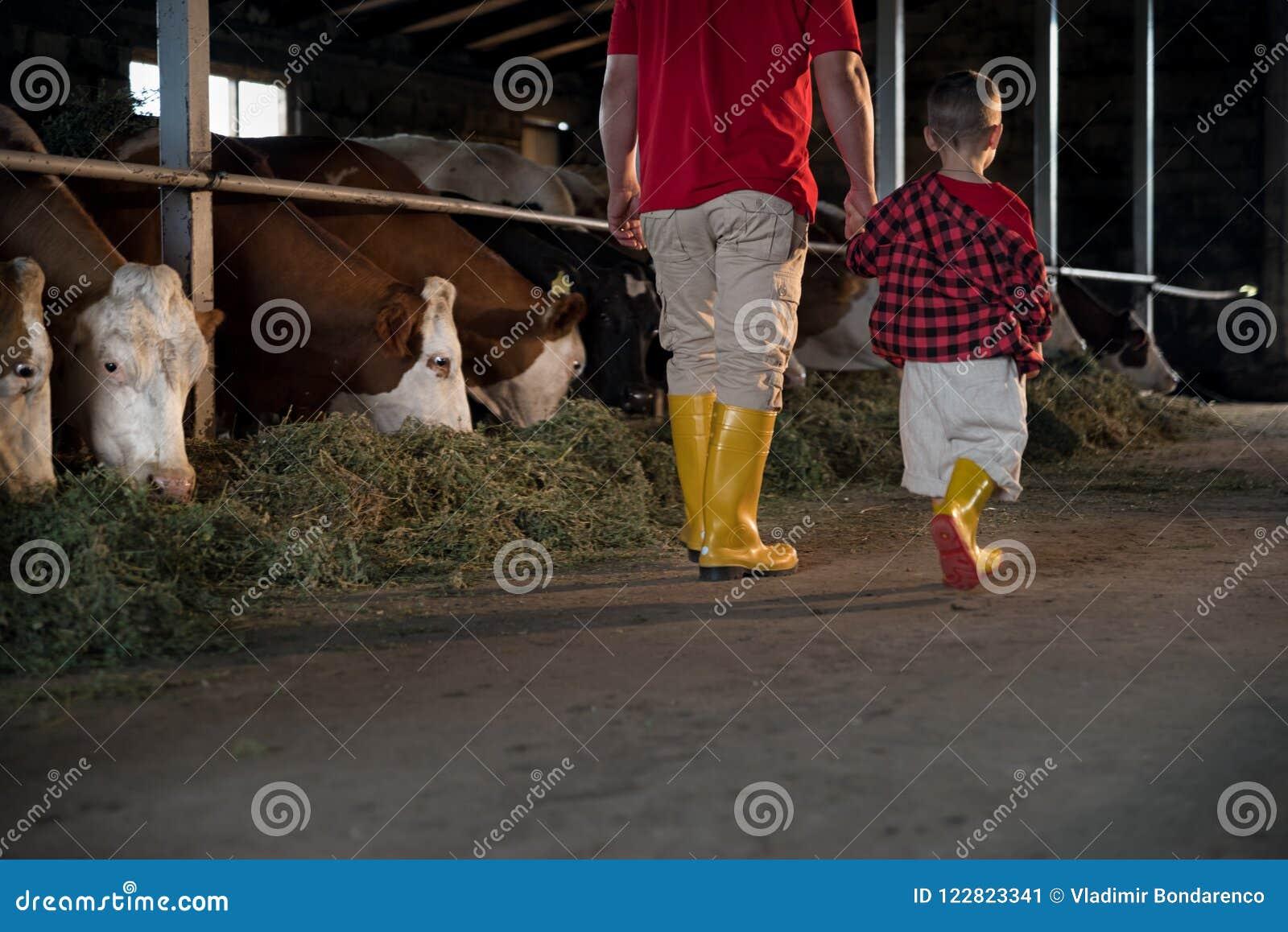 Agricoltura, la gente ed il concetto di bestiame - un uomo o un agricoltore con suo figlio che cammina lungo la stalla e le mucch