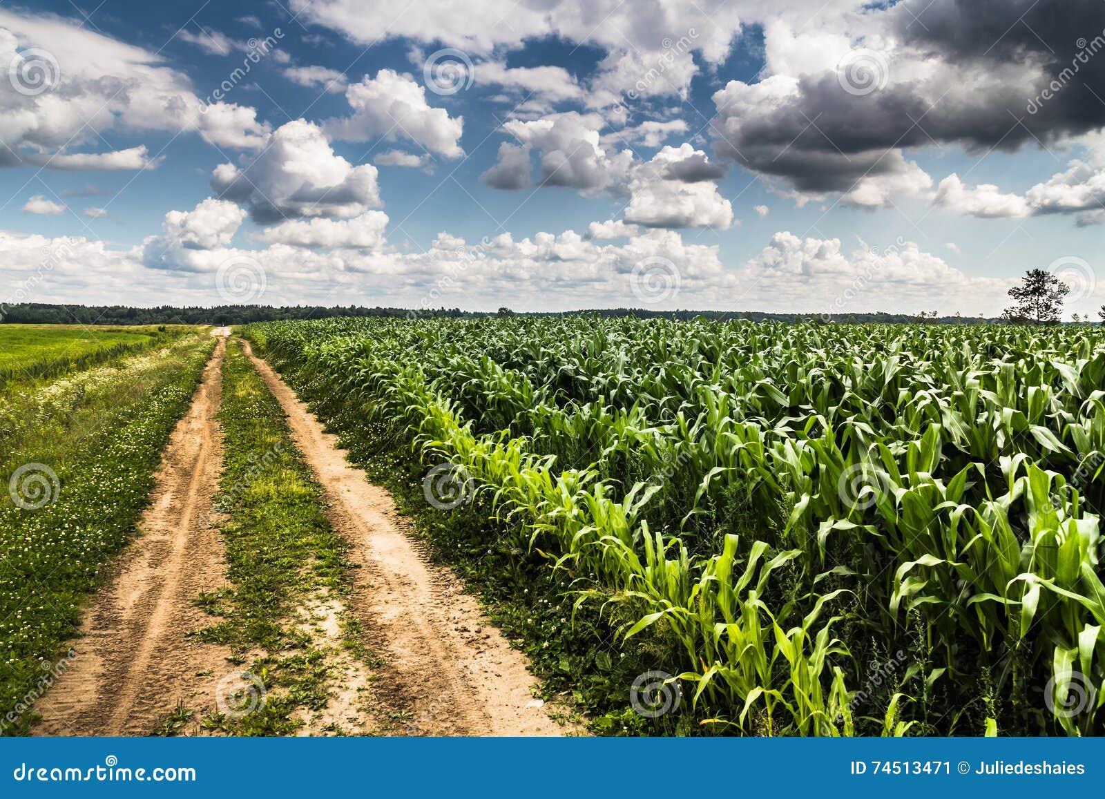 Agricoltura rurale che coltiva paesaggio