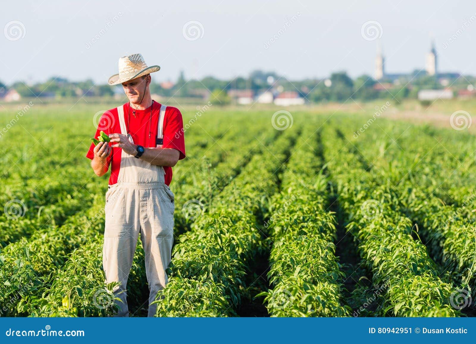 Agriculteur dans des domaines de poivre