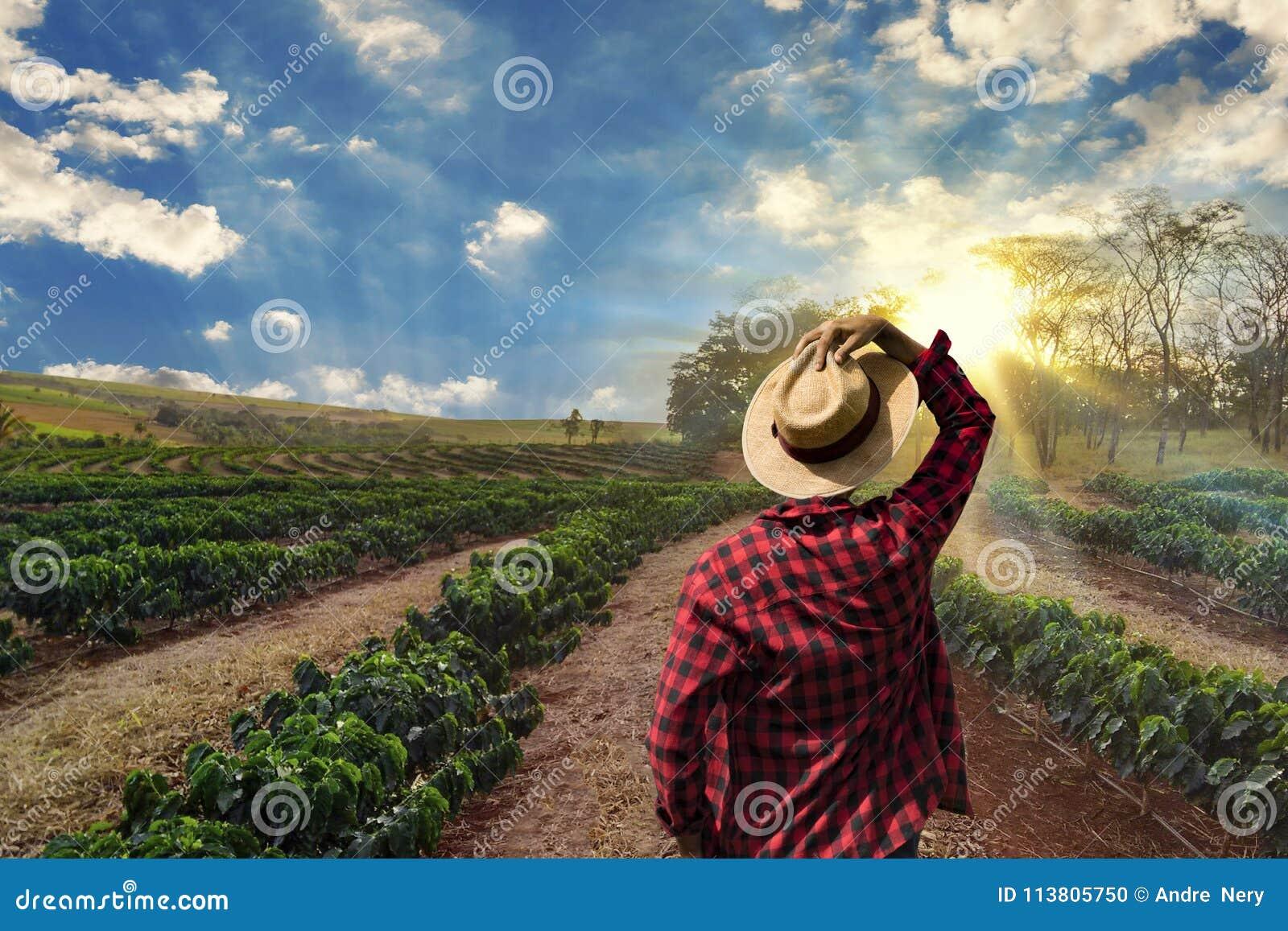 Agriculteur travaillant au gisement de café au coucher du soleil extérieur