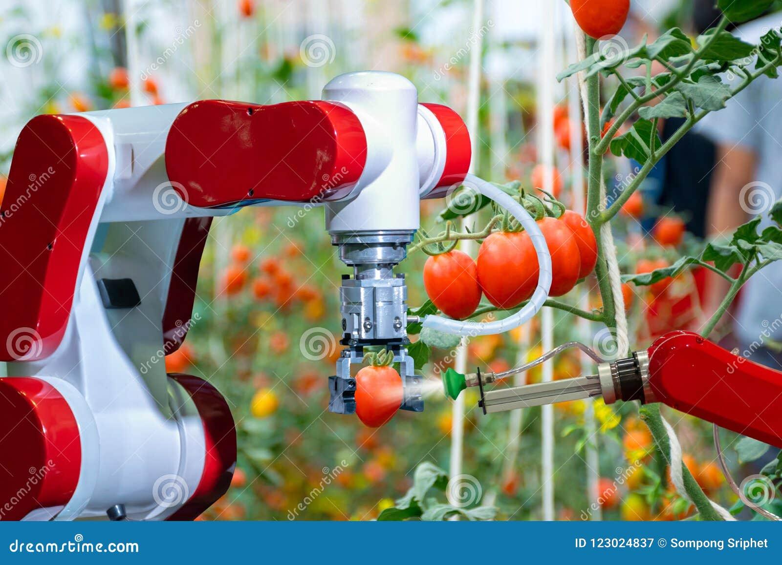 Agriculteurs robotiques futés dans l automation futuriste de robot d agriculture à travailler pour pulvériser l engrais chimique