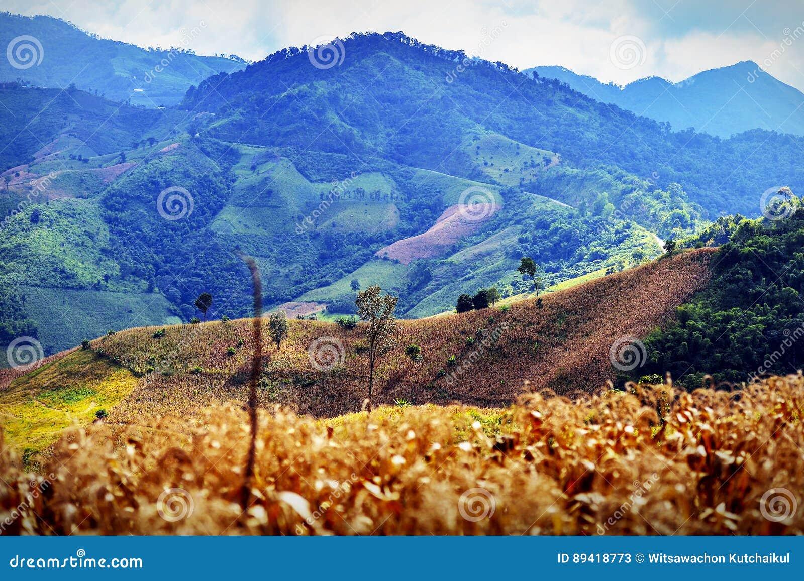 Agricultura da montanha