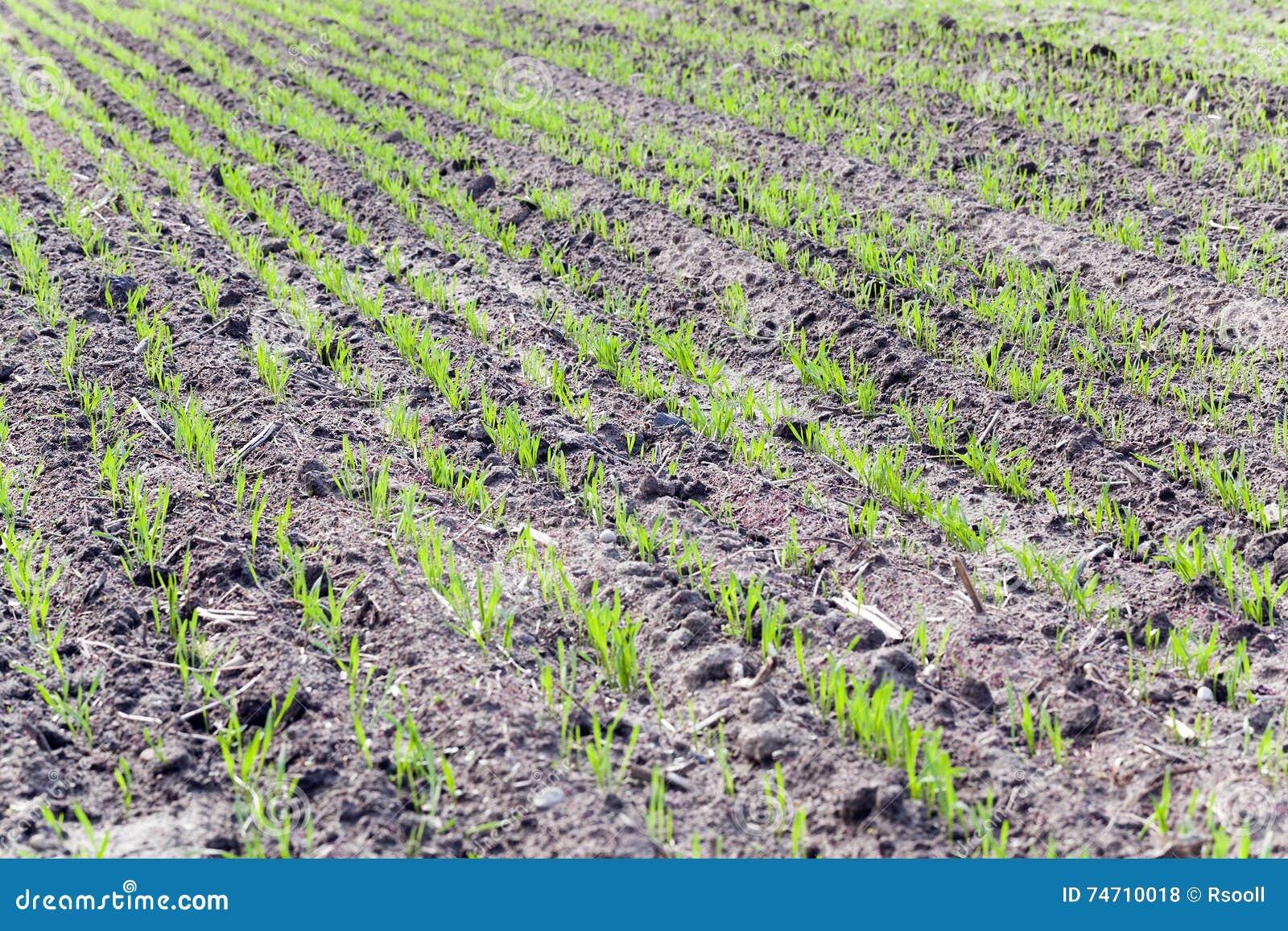 Agricultura de la foto, Europa